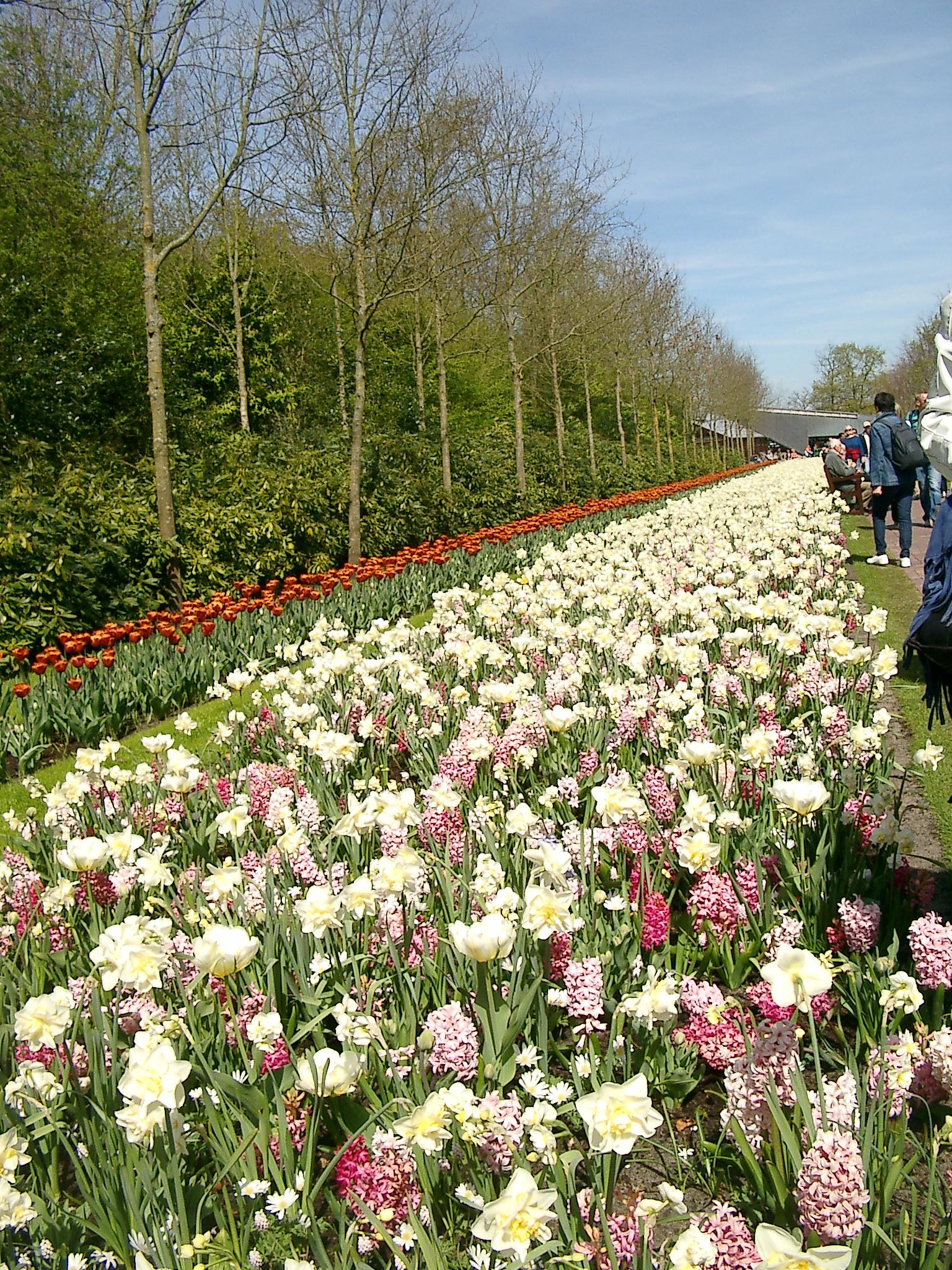 เห็นไหมคะ รูปนี้ ดอกไม้สุดลูกหูลูกตาไปเลย เดินยาวๆ ไปเลยค่ะ ดอกไม้ ดอกไม้ เต็มไปหมดเลย