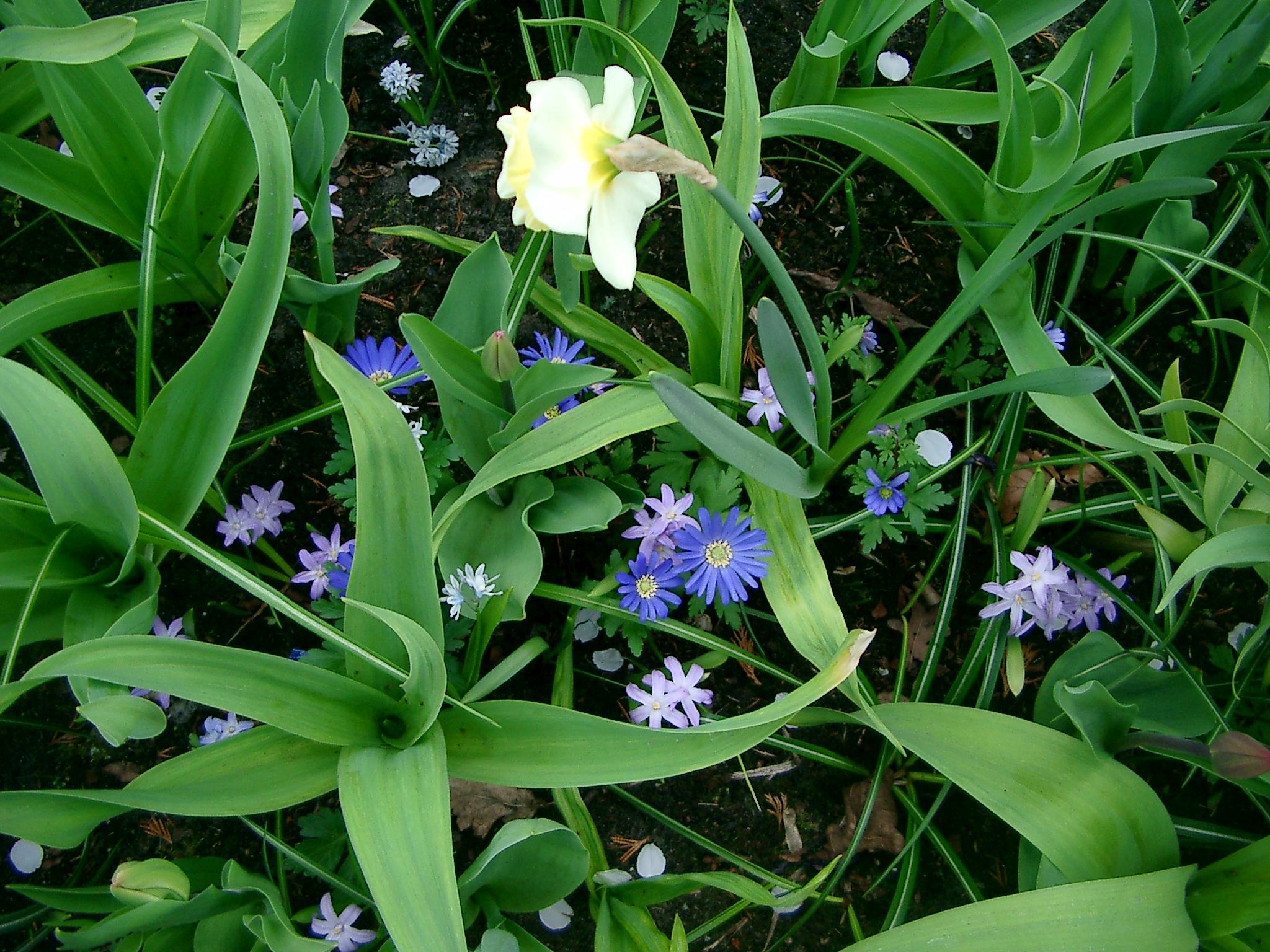 ออยชอบรูปนี้ที่สุด เอามาแบ่งปันให้ชมกันค่ะ ว่า แค่ดอกไม้เล็กๆ ในสวนแห่งนี้ ยังงามได้ขนาดนี้เลย :)