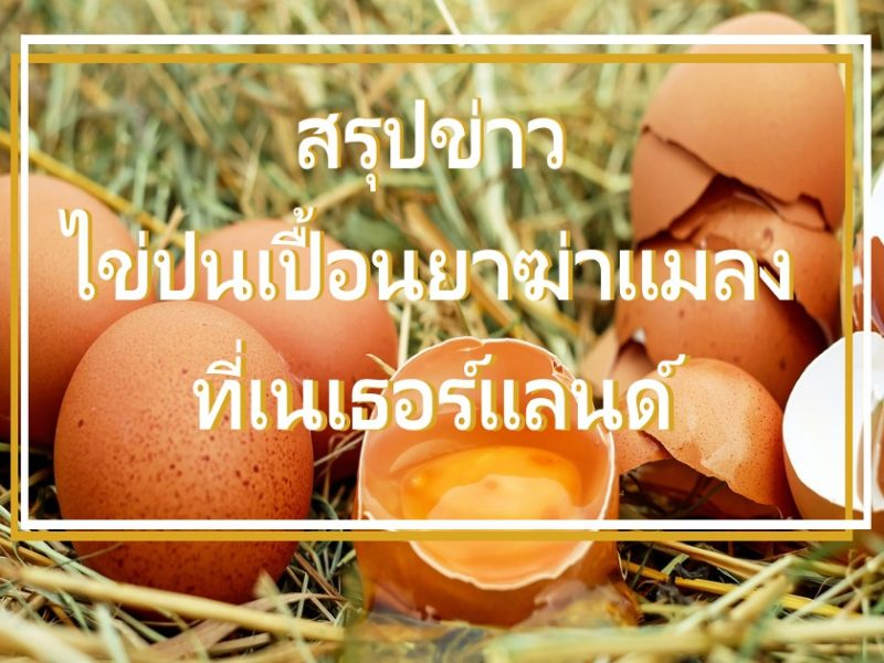 ไข่ปนเปื้อนยาฆ่าแมลง เนเธอร์แลนด์